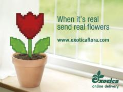 exotica online delivery